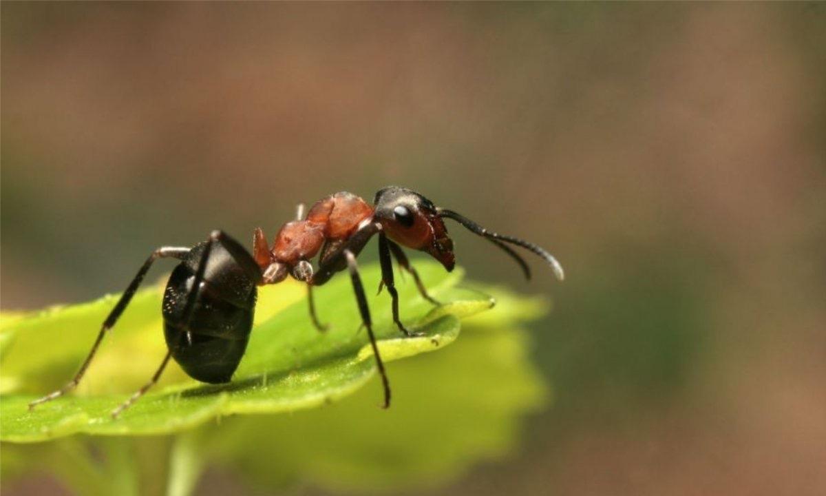 直接喷洒到花花草草上,就能在一定程度上抑制蚂蚁的生长.